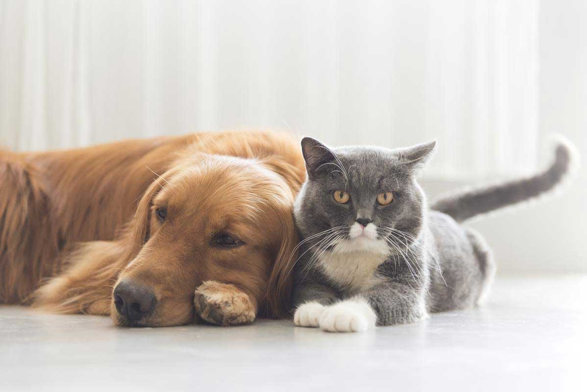 about our veterinary practice Paradise, CA